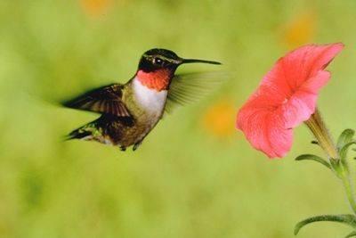 「一個沒有知識的旅行者等於一隻沒翅膀的鳥兒」—— 伊朗