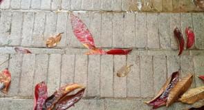 【識心靈】梨花帶雨