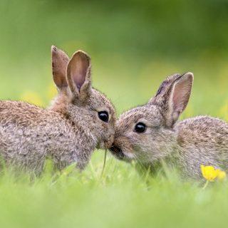 【識運程】Ken 師傅為您解說十二生肖運程(兔、龍、蛇生肖)