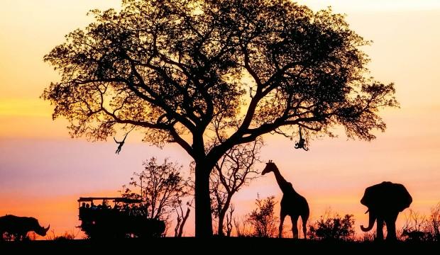 【悅目帶笑旅程】No. 5・肯亞國家公園